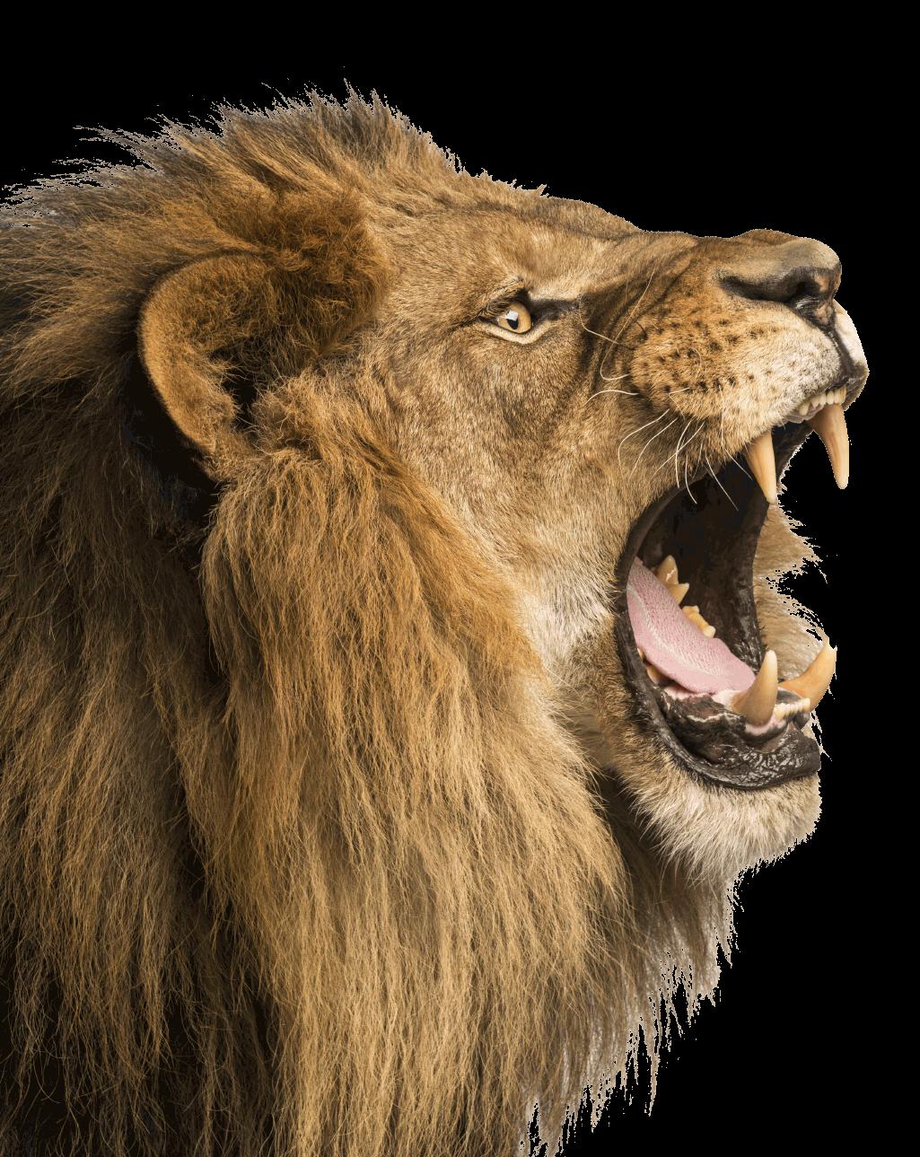 Dallas Personal Injury Lawyers | Ryan The Lion Thompson